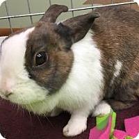 Adopt A Pet :: Nancy - Woburn, MA