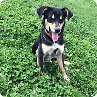 Adopt A Pet :: Jesse - Sistersville, WV