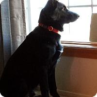 Adopt A Pet :: Copa - Mill Creek, WA