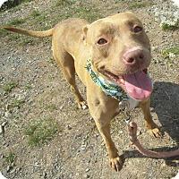 Adopt A Pet :: Bess - Portland, OR