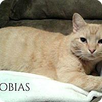 Adopt A Pet :: Tobias - Columbia, TN
