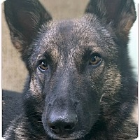 Adopt A Pet :: Hannah - Pascagoula, MS