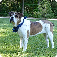Adopt A Pet :: Reesa - Mocksville, NC