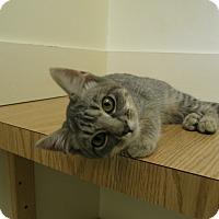 Adopt A Pet :: Shaelyn - Milwaukee, WI