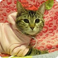 Adopt A Pet :: Uke - Lloydminster, AB