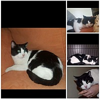 Adopt A Pet :: Stas - Long Beach, NY