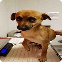 Adopt A Pet :: A1052913 - Bakersfield, CA