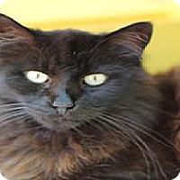 Adopt A Pet :: D-Day - El Cajon, CA