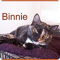 Domestic Shorthair Cat for adoption in Lacon, Illinois - Binnie