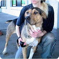 Adopt A Pet :: Annabelle - Scottsdale, AZ