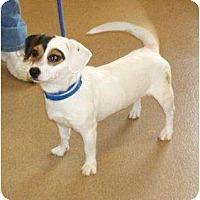 Adopt A Pet :: PENDINGTyson - Toronto/Etobicoke/GTA, ON