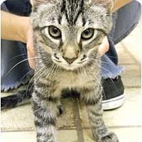 Adopt A Pet :: Tony - Naples, FL