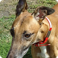 Adopt A Pet :: CD's Ron - Longwood, FL