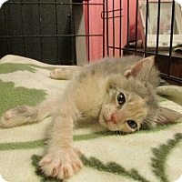 Adopt A Pet :: SYDNEY - Acme, PA