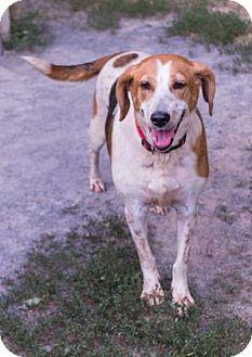 Hound (Unknown Type) Mix Dog for adoption in Fairfax, Virginia - Isabelle