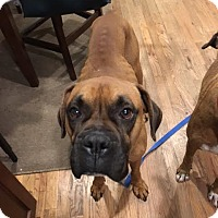 Adopt A Pet :: Pops - Austin, TX