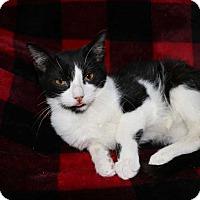 Adopt A Pet :: Beauty - Mackinaw, IL