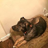 Adopt A Pet :: Roxy - Rowlett, TX
