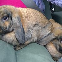 Adopt A Pet :: Rachet and Gaget - Seattle c/o Kingston 98346/ Washington State, WA
