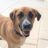 Adopt A Pet :: Veranda - Spring, TX