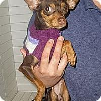 Adopt A Pet :: Reese - Oceanside, CA