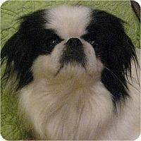 Adopt A Pet :: Chin Chin-NJ - Mays Landing, NJ