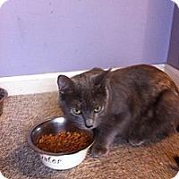Adopt A Pet :: Chance :urgent! - Piscataway, NJ