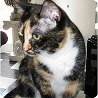 Adopt A Pet :: Sweet-Ums - Jeffersonville, IN