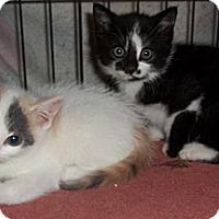 Adopt A Pet :: Marta - Acme, PA