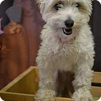 Adopt A Pet :: MEL - Higley, AZ