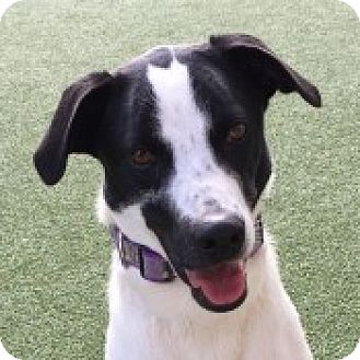 Border Collie Mix Dog for adoption in San Francisco, California - Collie