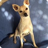 Adopt A Pet :: Dwayne - Temecula, CA