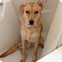 Adopt A Pet :: Honey - Phoenix, AZ
