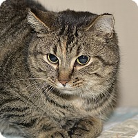 Adopt A Pet :: Kitrina - Medina, OH
