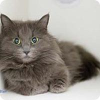 Adopt A Pet :: Blair - Merrifield, VA