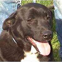 Adopt A Pet :: TG-Adrianna - Tyler, TX