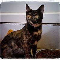 Adopt A Pet :: Christine - Jackson, MO