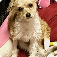 Adopt A Pet :: Marjorjam - Irvine, CA