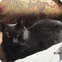 Adopt A Pet :: Jasmine - Sanford, ME