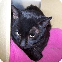 Adopt A Pet :: Fandango - Colorado Springs, CO