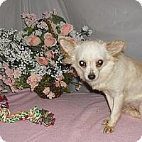 Adopt A Pet :: Silkey - Chandlersville, OH