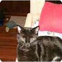 Adopt A Pet :: Onyx - Grand Rapids, MI