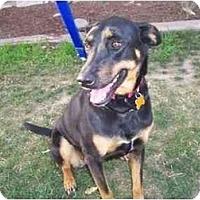 Adopt A Pet :: Agatha - Scottsdale, AZ