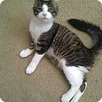 Adopt A Pet :: Cooper - San Ramon, CA