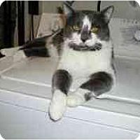 Adopt A Pet :: Spot-Sponsor - Toronto, ON