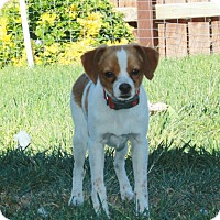 Adopt A Pet :: Tipper - California City, CA