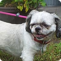 Adopt A Pet :: SMOKEY - Odessa, FL