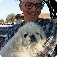 Adopt A Pet :: Big T - SO CALIF, CA
