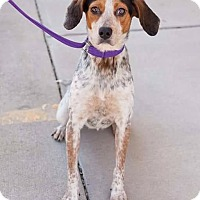 Adopt A Pet :: Maude - Richmond, VA