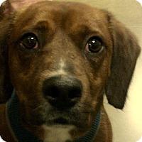 American Bulldog Mix Dog for adoption in Newnan, Georgia - Reuben
